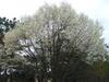 2007_0328kokorogu0234_1