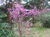 2007_0406kokorogu0243